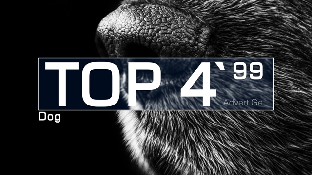 TOP 5 Ads with Dogs